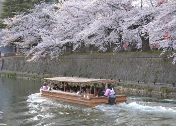 岡崎界隈十石舟 桜めぐりコース