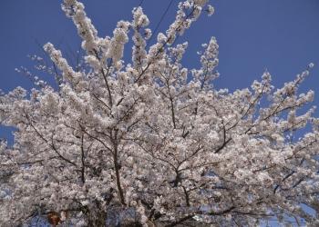 宝が池、植物園〜上賀茂神社散策コース