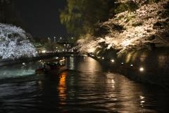 岡崎桜回廊ライトアップ
