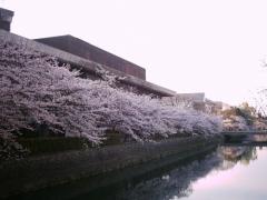 岡崎桜回廊十石舟めぐり