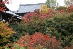 東福寺 秋の看楓特別拝観