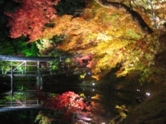 高台寺 秋の夜間特別拝観