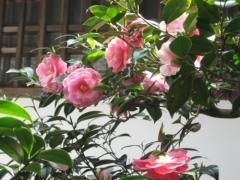 法然院 春季 伽藍内の特別公開