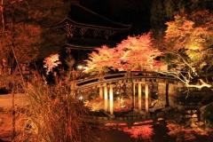知恩院 秋の紅葉ライトアップ