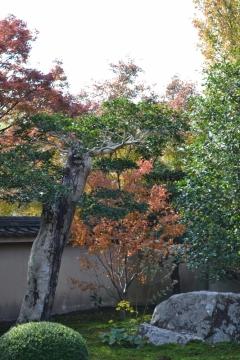 天得院 秋の特別拝観とお食事