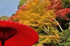 白龍園「秋の特別観覧」