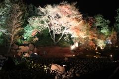 宝厳院 秋の夜間特別拝観