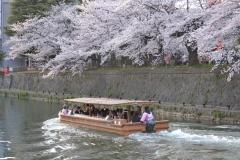 岡崎桜・わかば回廊 十石舟めぐり