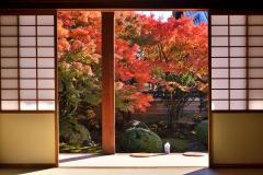 妙顕寺 秋の 特別拝観