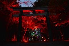 大原野神社紅葉夜間ライトアップ