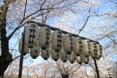 平野神社のライトアップ