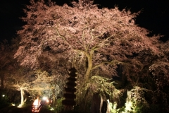 嵐山中之島島公園 ライトアップ