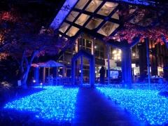 梅小路公園「緑の館」内『京野菜レストラン梅小路公園』 冬のイルミネーション