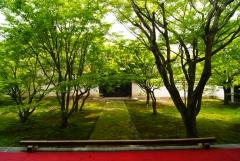 妙覚寺 新緑の青もみじ「法婆園」特別拝観