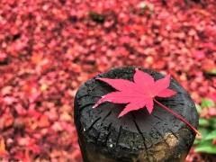 京都の第一人者が大集合!! らくたび秋の文化祭(後援:京都新聞)