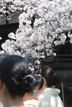 毘沙門堂観桜会