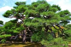 妙顕寺 琳派四〇〇年記念 秋の特別拝観