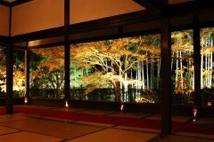 宝泉院  秋の夜間特別拝観