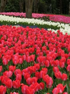第13回 早春の草花展