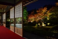 雲龍院 秋の特別拝観と夜間ライトアップ
