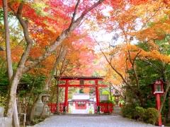 大原野神社紅葉夜間ライトアップ「光と水」