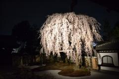 高台寺 春の特別展・夜間拝観