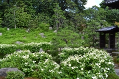 半夏生の庭園 特別公開