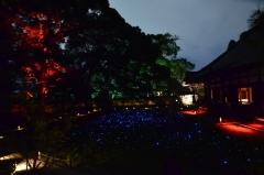 青蓮院 夜の特別拝観