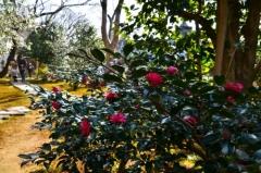春の特別公開 霊鑑寺