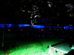 青蓮院 青不動復元模写公開・ライトアップ