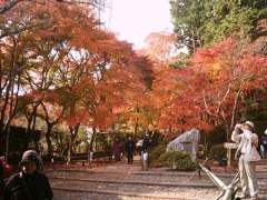 光明寺 紅葉の特別入山